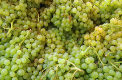Small green grapes bunches Royalty Free Stock Photos