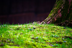 Small Green Grasses Stock Images