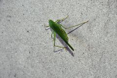 Small green insect on the wall royalty free stock images