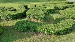 Small green Labyrinth garden in the palace Stock Photos