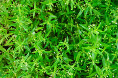 Small green leaves. Stock Image