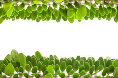 Small green leaves border isolated on white background. Row of small green leaves border isolated on white background Royalty Free Stock Photos