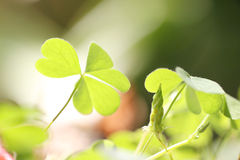 Small green leaves of macro style. Royalty Free Stock Image