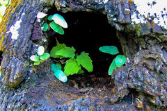 Small green leaves in a tree hollow. Close-up of some small green leaves growing from a dark tree hollow Stock Photos