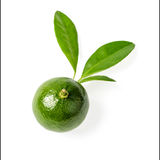 Small green lime, tilt shift lens Royalty Free Stock Photos