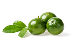 Small green lime Royalty Free Stock Photos