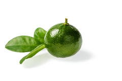 Small green lime Stock Photo