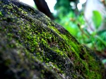 Small green moss embraces the big rock. stock photo