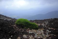 Moss green, small tree in nature on rocky ground. A small green moss on a natural rocky ground with a suitable moisture gives the moss grow royalty free stock images