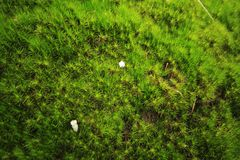 Moss green, small tree in nature on rocky ground. A small green moss on a natural rocky ground with a suitable moisture gives the moss grow royalty free stock photo