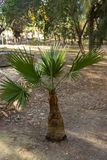 Small green palm royalty free stock images