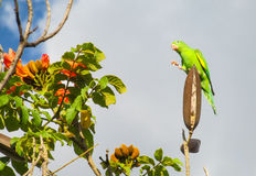 Small green parrot on flower tree branch Royalty Free Stock Image
