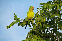 Small green parrot on a tree branch stock photography