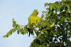 Small green parrot on tree branch stock image