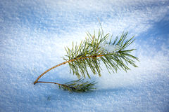 Small green pine brunch in snow Stock Photography