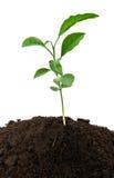 Small green plant Royalty Free Stock Photo