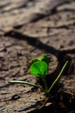 Small green plant Royalty Free Stock Photography