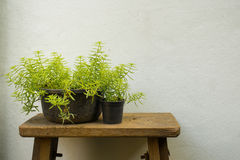 Small green plant at brown and green flower pot Stock Images