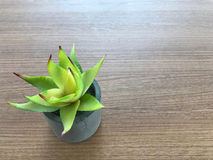 Small Green plant on concrete pot on wooden table. copy space Stock Photos
