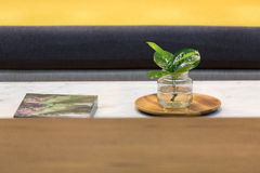 Small green plant. Decorated on a marble coffee table in a yellow living room stock photo