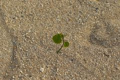 Small green plant flourishes in a hostile environment. A small green plant flourishes in a seemingly barren patch of sand in landscape format with copy space royalty free stock images