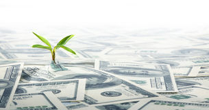 Small Green Plant Growing on the Field of Dollars Notes Stock Photography