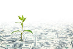 Small Green Plant Growing on the Field of Dollars Notes Stock Images