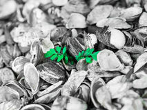 Small green plant growing out of a sea of shells Stock Photo