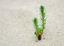 Small green plant growing on sand Stock Photo