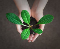 Small green plant in the hands Stock Image