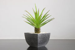 Small green plant for home decoration Stock Image