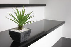 A small green plant for home decoration. Placing on the stair Stock Photo