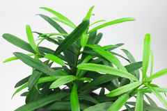 Small green plant Royalty Free Stock Image
