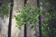 Small Green Plant Leaves Royalty Free Stock Images