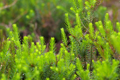 Small green plant Stock Image