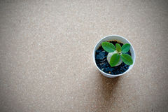 Small green plant in the pot on the cork board background Stock Photos