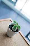 Small green plant in the pot on the cork board background Royalty Free Stock Photography
