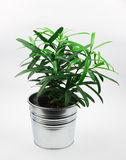 Small green plant in pot isolated on white Stock Images