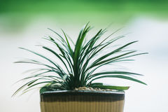 Small green plant in the pot shallow depth of field. Closeup small green plant in the pot shallow depth of field blur background Stock Photos