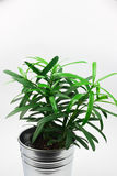 Small green plant in pot  on white Royalty Free Stock Photos