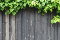 Small green plant on vintage wooden background, border design Stock Photos