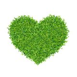 Small green plants. Depend A heart shape. on on white background isolated royalty free stock photos