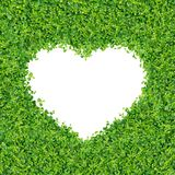 Small green plants. Depend A heart shape. on on white background isolated royalty free stock photography