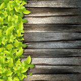 Small green plants. Depend on old wood background royalty free stock photos