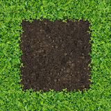 Small green plants. Depend soil manure a square frame royalty free stock images