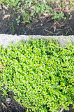 Small green plants Stock Images