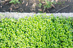 Small green plants Royalty Free Stock Images