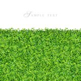 Small green plants and grass. On white background isolated stock photography