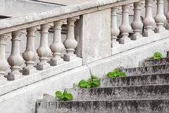 Small green plants grow through old stone stairs Stock Image