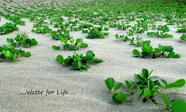 Small green plants on sandy beach Royalty Free Stock Photos